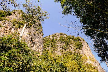 Tree in the mountains Stok Fotoğraf