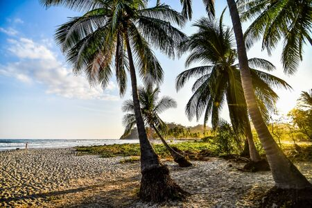 palm tree on the beach, photo as a background, digital image