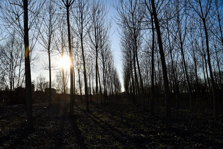 sunset in the forest, photo as a background, digital image