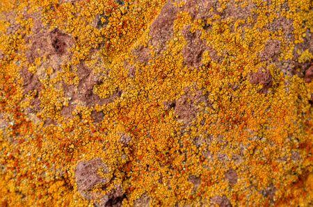 Lichen Texture Pattern Background on the Floor