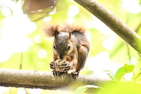 squirrel on tree, photo as a background, digital image Фото со стока