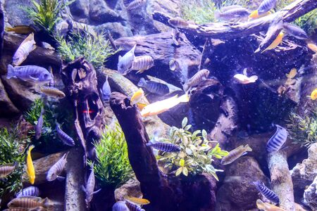 Photo Picture an Acquarium Full of Beautiful Tropical Fishes