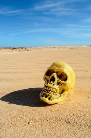 Conceptual Photo Picture of a Human Skull Object in the Dry Desert Stock Photo