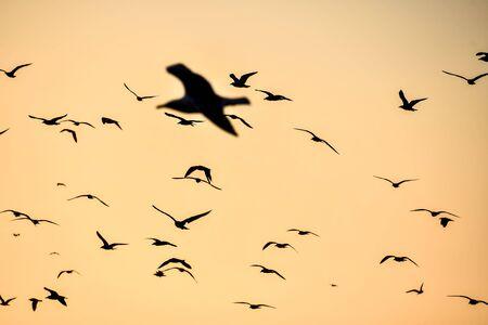 uccelli che volano nel cielo, bella foto digitale immagine