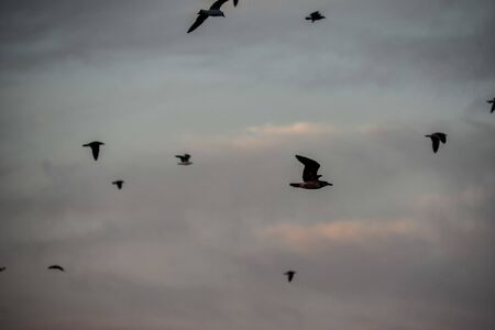 birds in flight, beautiful photo digital picture Stock Photo