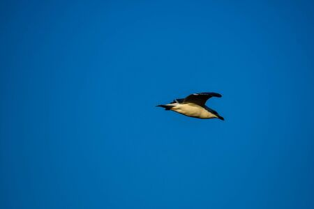 bird in flight, beautiful photo digital picture Standard-Bild