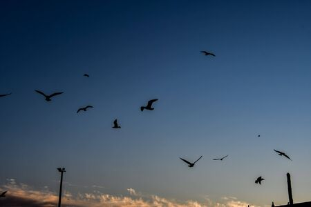 flock of seagulls flying in the sky, beautiful photo digital picture