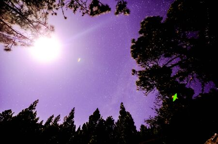Stars in the Sky at Night over the Trees of a Pine Forest Stock fotó