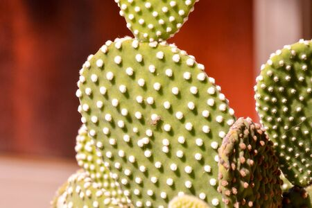 Photo Picture of a Tropical Cactus Texture Background 写真素材