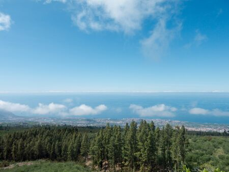 Beautiful green pine trees on Teide mountains in Tenerife Canary Islands Spain