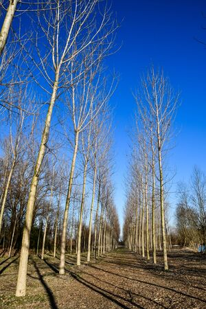 bare trees in winter, photo as a background, digital image 写真素材