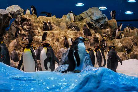 penguins in antarctica, beautiful photo digital picture