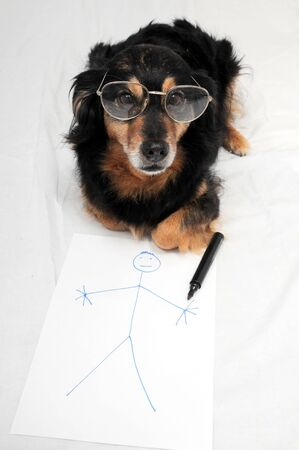 One Female Old Black Dog Drawing on a White Paper 写真素材