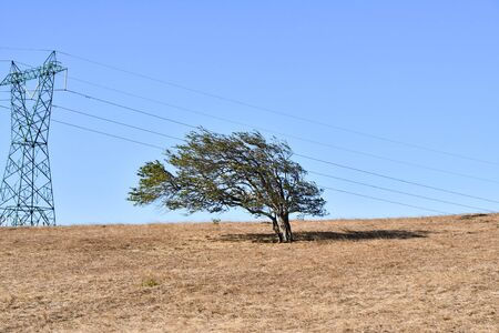 tree in desert, photo as a background, digital image