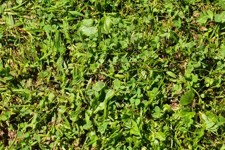 Photo Picture of the Green Grass Pattern Texture Background