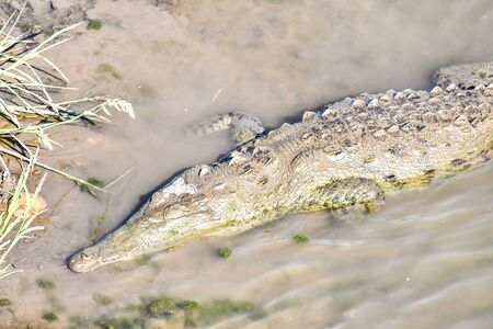 crocodile with mouth wide open, photo as a background, digital image