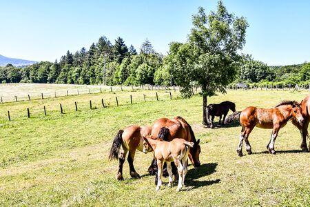 herd of horses grazing in meadow, photo as a background, digital image Reklamní fotografie