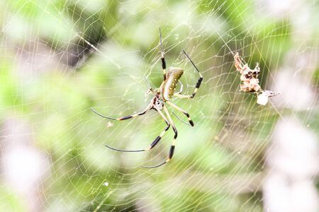 spider on the web, photo as a background, digital image