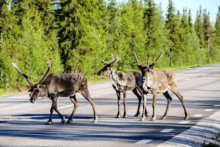 herd of deer in the forest, beautiful photo digital picture Stock Photo