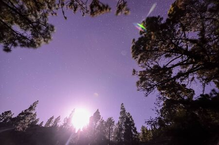 Stars in the Sky at Night over the Trees of a Pine Forest Stock Photo