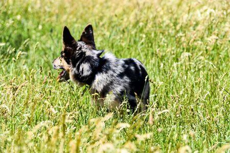 dog on grass, photo as a background, digital image Archivio Fotografico - 134394963