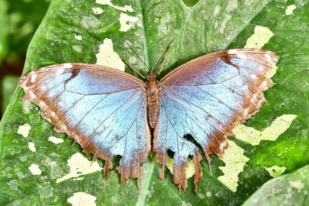 butterfly on leaf, photo as a background, digital image