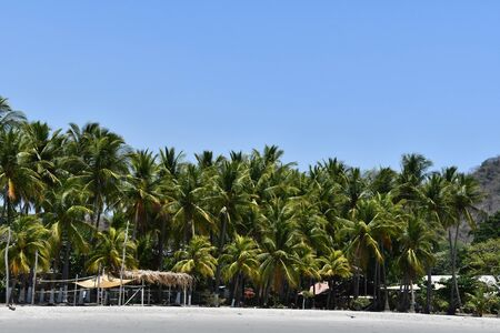 palm trees on the beach, photo as a background, digital image