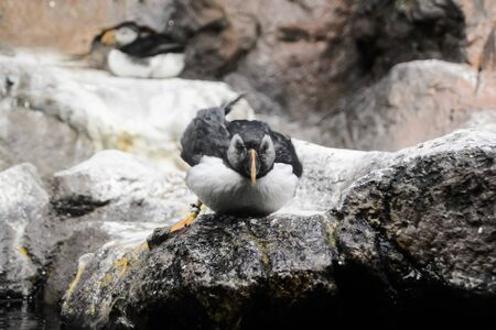 Picture of Wild Penguin Animal Bird Playing Stok Fotoğraf