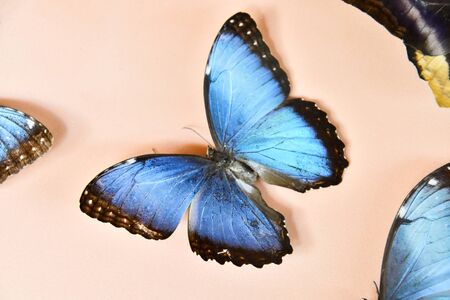 butterfly on hand, photo as a background, digital image