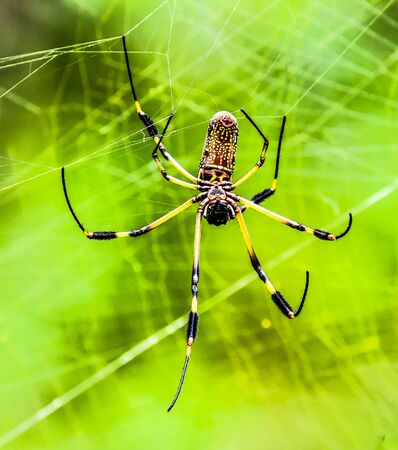spider on web, photo as a background, digital image