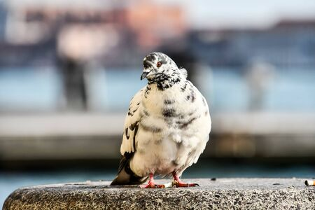 pigeon on rock, photo as a background, digital image Standard-Bild