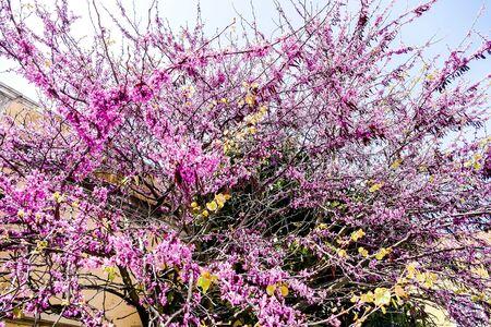purple flowers in the garden, beautiful photo digital picture Фото со стока