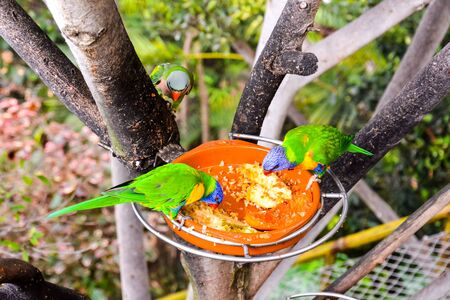 Photo Picture of a Beautiful Colored Tropical Parrot