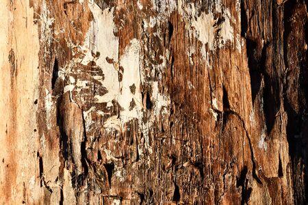 écorce d'un arbre, photo en arrière-plan, image numérique