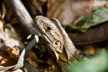 lizard on a rock, photo as a background, digital image 版權商用圖片