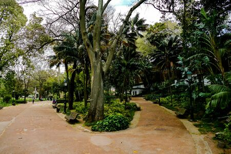alley in the park, beautiful photo digital picture Banco de Imagens