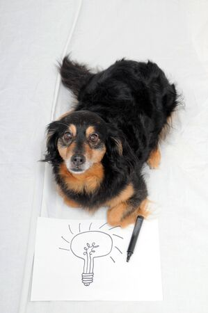 One Female Old Black Dog Drawing on a White Paper 스톡 콘텐츠