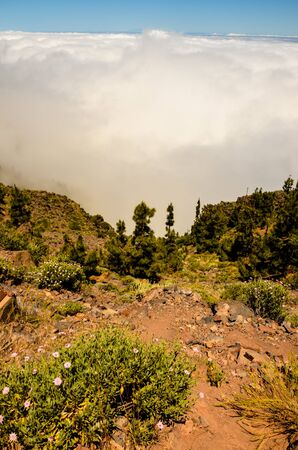 High Clouds over Pine Cone Trees Forest in Tenerife Island 写真素材 - 138835693