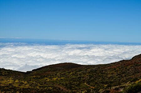High Clouds over Pine Cone Trees Forest in Tenerife Island 스톡 콘텐츠