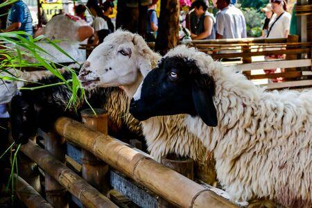 Schönes Foto, aufgenommen in Thailand, Südostasien
