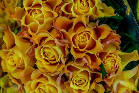 Photo image a Beautiful Bouquet of many colored flowers Banco de Imagens
