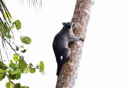 lemur sitting on tree, photo as a background, digital image