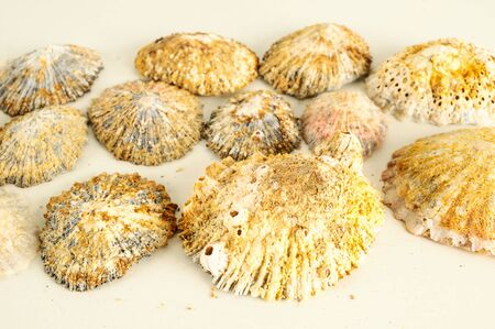 Seashell background texture lots of sea snails mixed