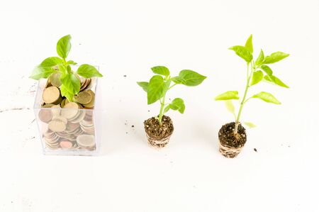 Plant Growing In Savings Coins Investment And Interest Concept Zdjęcie Seryjne