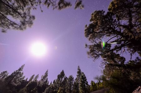 Stars in the Sky at Night over the Trees of a Pine Forest Stok Fotoğraf