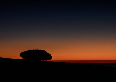 Picture of The Backlight Tree Silhouette over a Sunset Sky 版權商用圖片