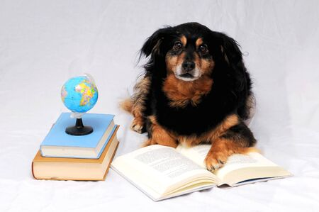 One intelligent Black Dog Reading a Book on a White Background
