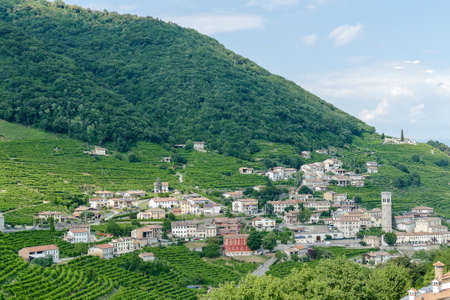 Prosecco White Wine Vineyards , in Prosecco Valley, Vadobbiadene Treviso Italy