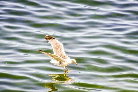 duck in water, photo as a background, digital image Standard-Bild