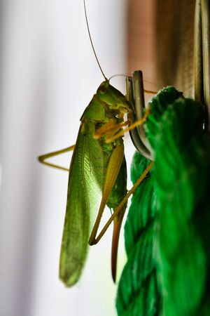 grasshopper on green background, photo as a background, digital image